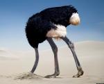 ostrich-in-sand.jpg