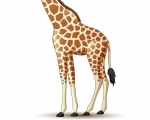 girafe-dessin-anime-isole-fond-blanc_29190-4316.jpg