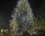 arbre-noelbordeaux.jpg
